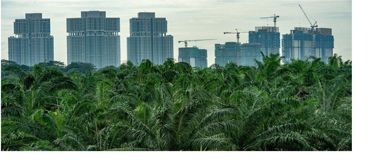 未完成的塔与马来西亚热带景观共存-羽兔网资讯