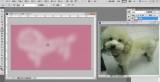 PS零基础入门到精通:教你怎么使用ps绘制一个写实泰迪狗!-羽兔网资讯